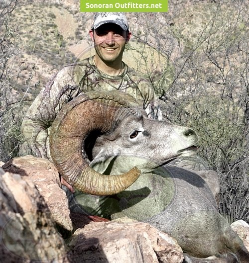 Bighorn sheep hunting Sonoran Outfitters